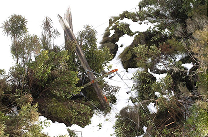 Badly maintained trees near power lines causing outages in storms image